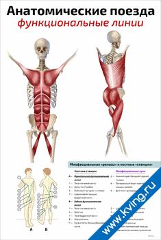 Плакат анатомические поезда: функциональные линии