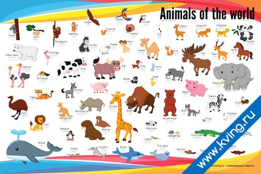 Плакат животные мира i