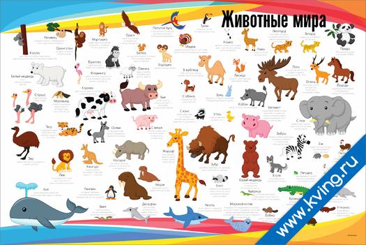Плакат животные мира