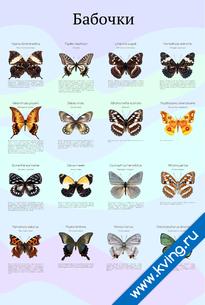 Плакат бабочки