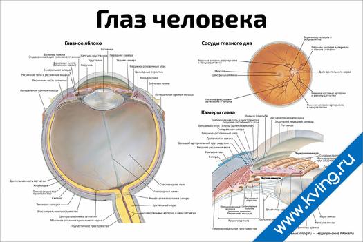 Плакат глаз человека