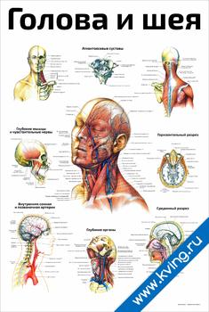 Плакат голова и шея
