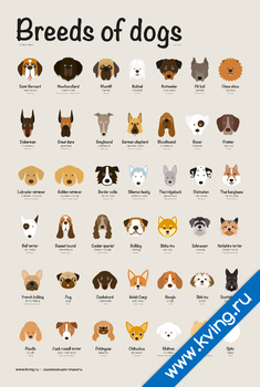 Плакат породы собак