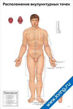Плакат расположение акупунктурных точек: мужчина-фаз