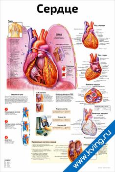 Плакат сердце и функции