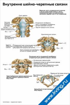 Плакат внутренне шейно-черепные связки