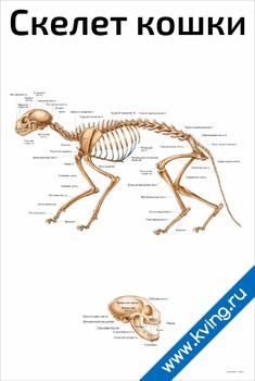 Плакат скелет кошки
