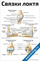 Связки локтя — медицинский плакат